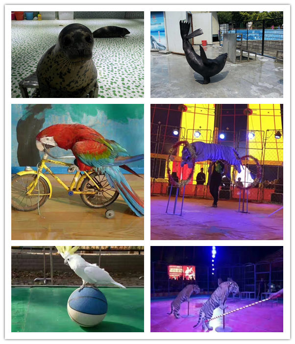 邛崃市企鹅展览出租哪里有