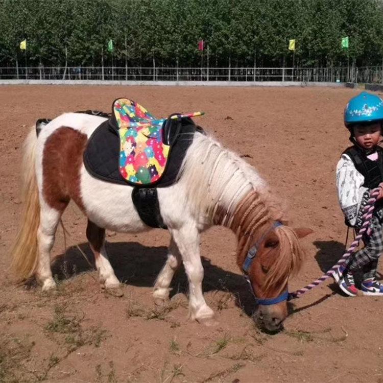 在线咨询:德保矮马内蒙古有出售的吗什么价格种矮马