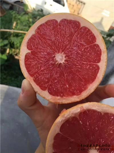 葡萄柚苗哪里有卖威远县
