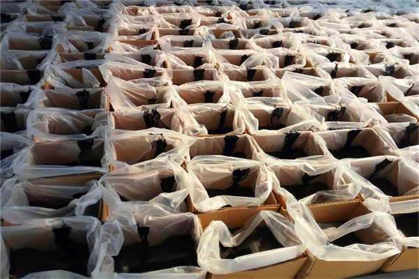 锡林郭勒盟沥青灌缝胶股份有限公司(价格)
