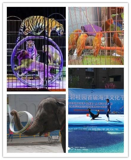 温州市萌宠动物表演出租