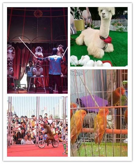 广东连南市马戏团表演出租