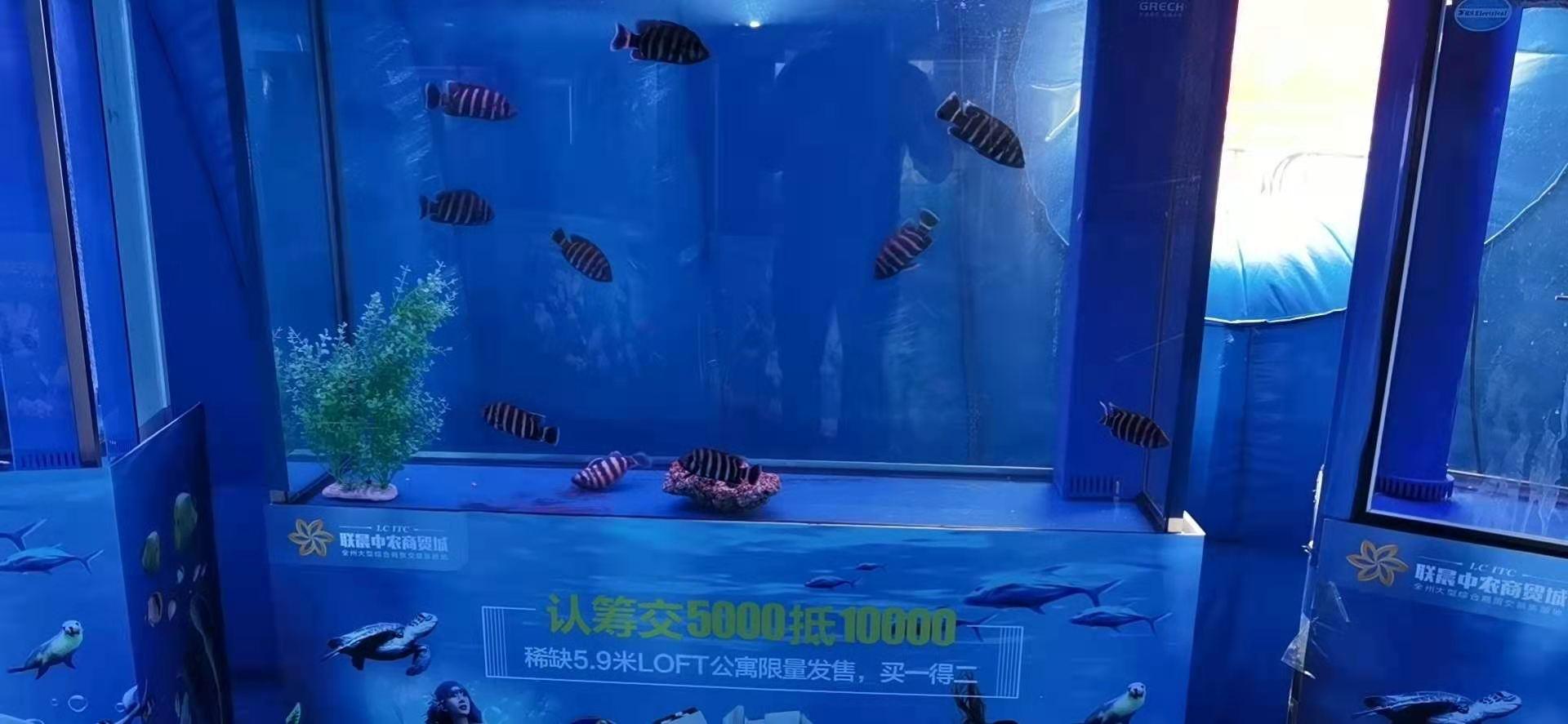 怀化市海洋生物展出租