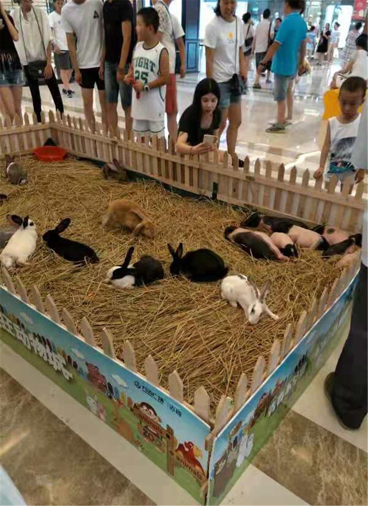 岭东区萌宠动物出租租赁欢迎来电