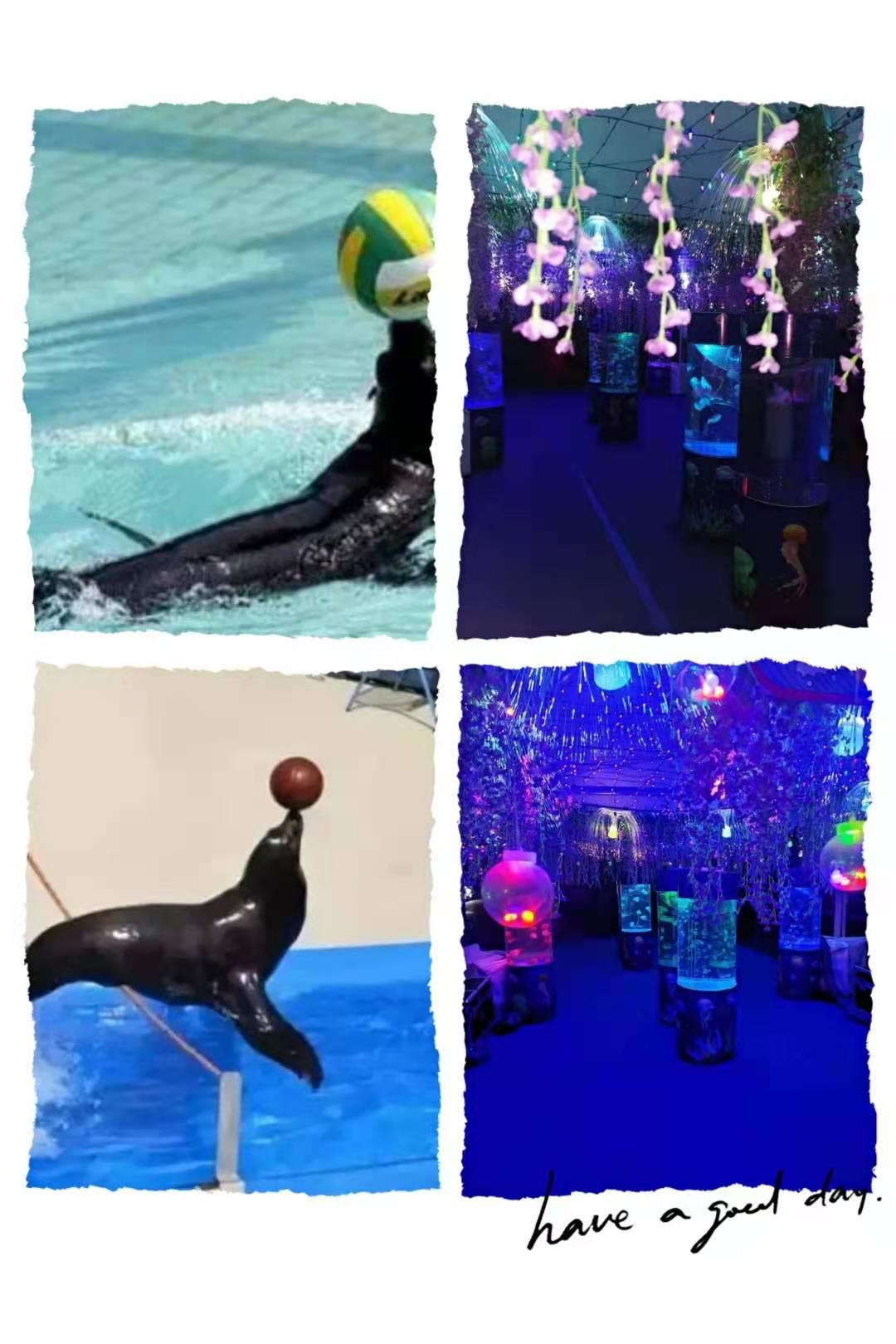 咸宁市有没有企鹅展览租赁